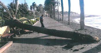 Очередная пальма