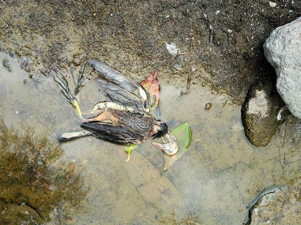 Расследуется возможное массовое отравление животных в Anaga
