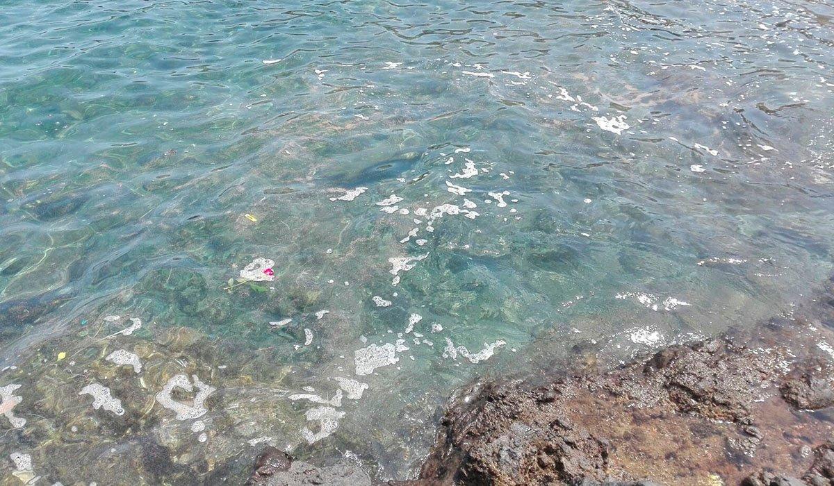 Микроводоросли: сегодня состоится народная ассамблея по этому поводу в столице Тенерифе