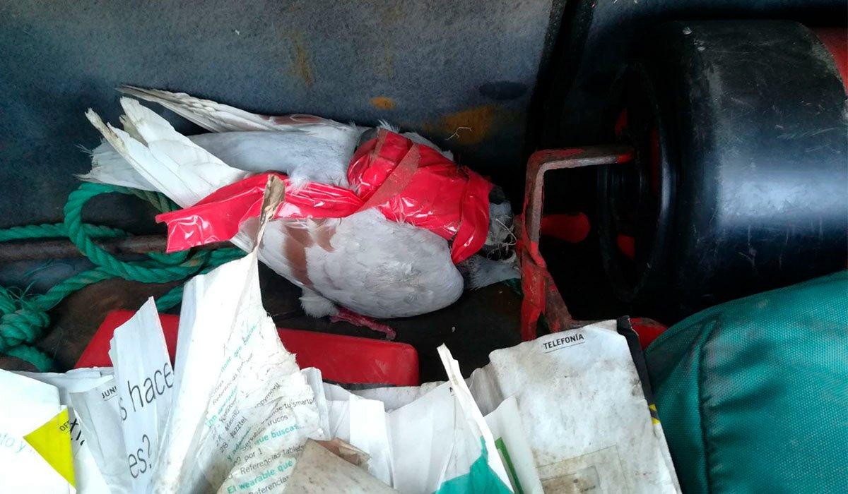 Заключенные в Tenerife II используют голубей в качестве транспорта