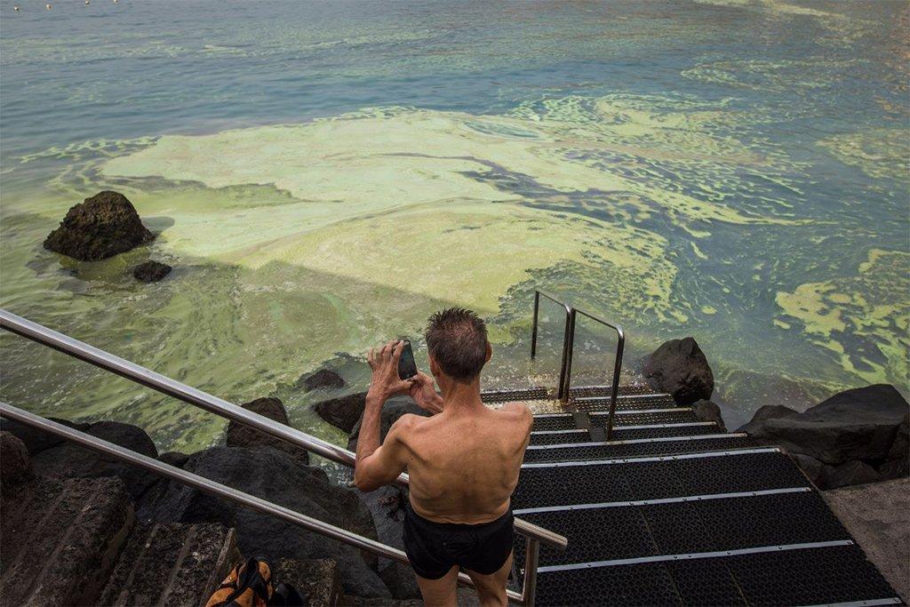 Этим летом на Канарских островах будет кому собирать микроводоросли с пляжей