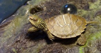 Женщина пришла в Hospital del Sur с мертвой черепахой во влагалище