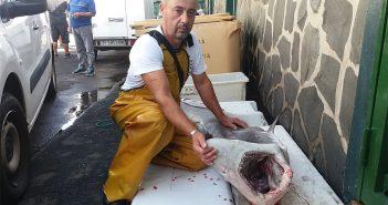 Недалеко от Candelaria, на Тенерифе, рыбак поймал двухметровую акулу