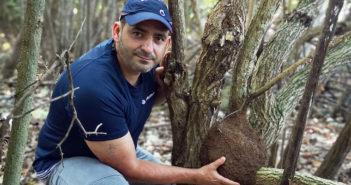 Необходимы срочные меры: термиты распространяются на Тенерифе, как чума