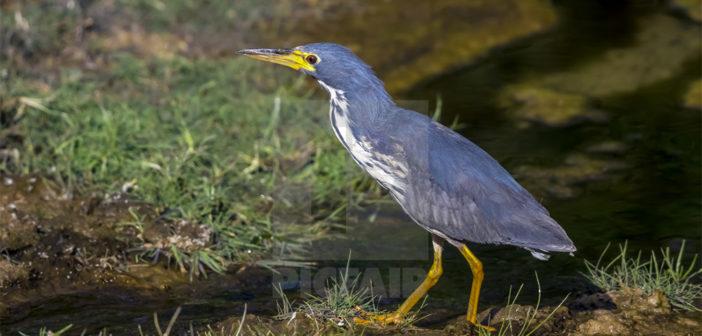 Редкие птицы вызывают тревогу на Канарах: климат меняется...