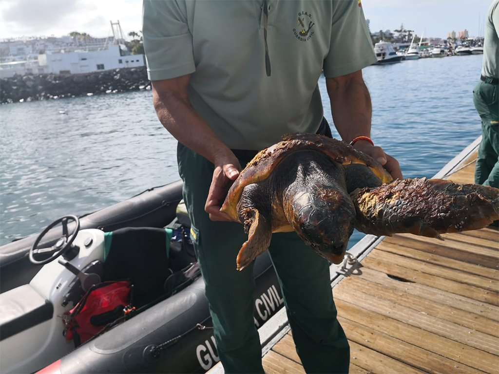 Спасли черепаху-каретту, запутавшуюся в мусоре на юге Тенерифе