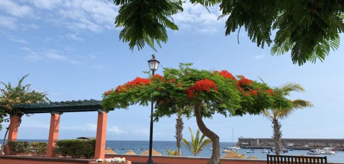 Этот май на Канарских островах - самый сухой в этом веке