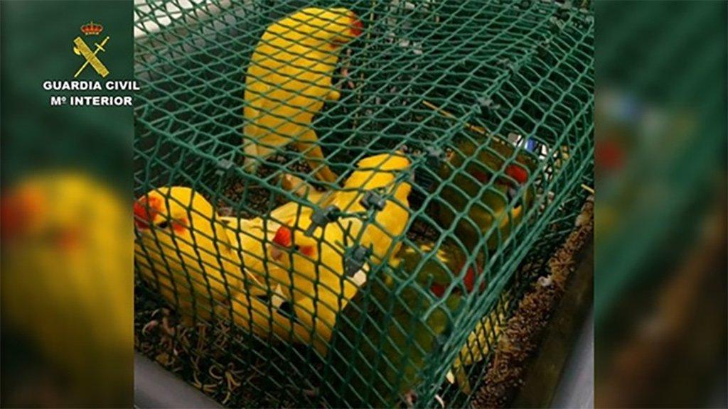 Кладбище птиц в багаже колумбийца обнаружили в аэропорту Тенерифе