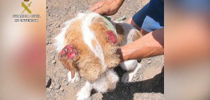 """Adeje: британец """"держал в заточении"""" десятки собак в ужасном состоянии"""