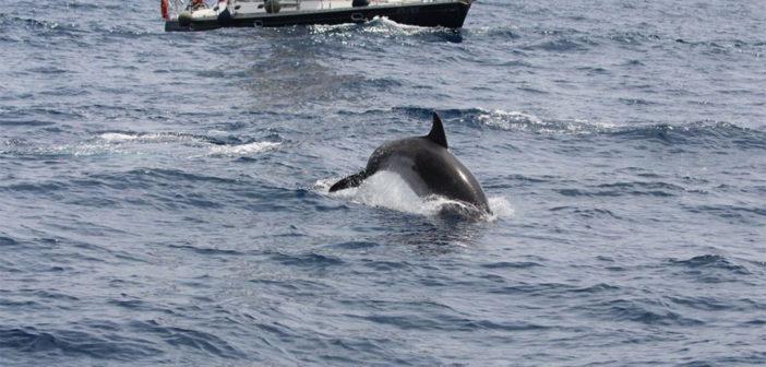 Тенерифе: больше не будет новых лицензий на экскурсии к китам