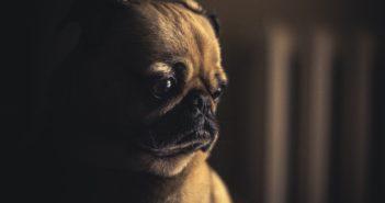 Arona: применяются меры по обязательной переписи животных