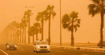 Учёные обнаружили ещё один большой вред от калимы