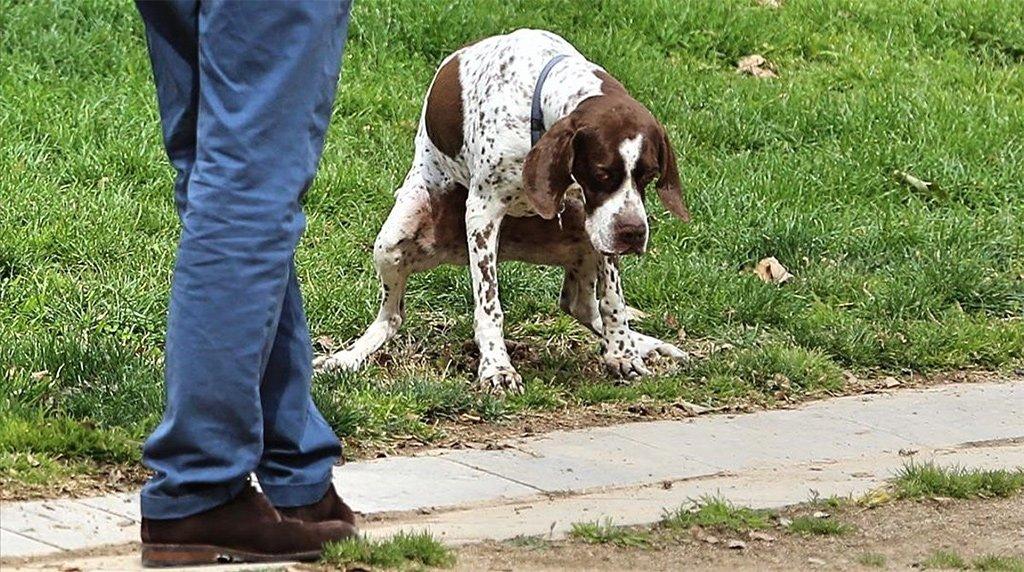 Тенерифе: десятки штрафов владельцам собак за нарушения