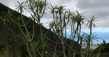 Оранжевое предупреждение о сильных ветрах на Тенерифе