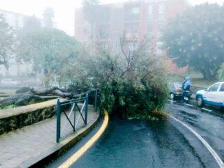Погода шалит на Канарах: упавшие деревья и отключение электроэнергии